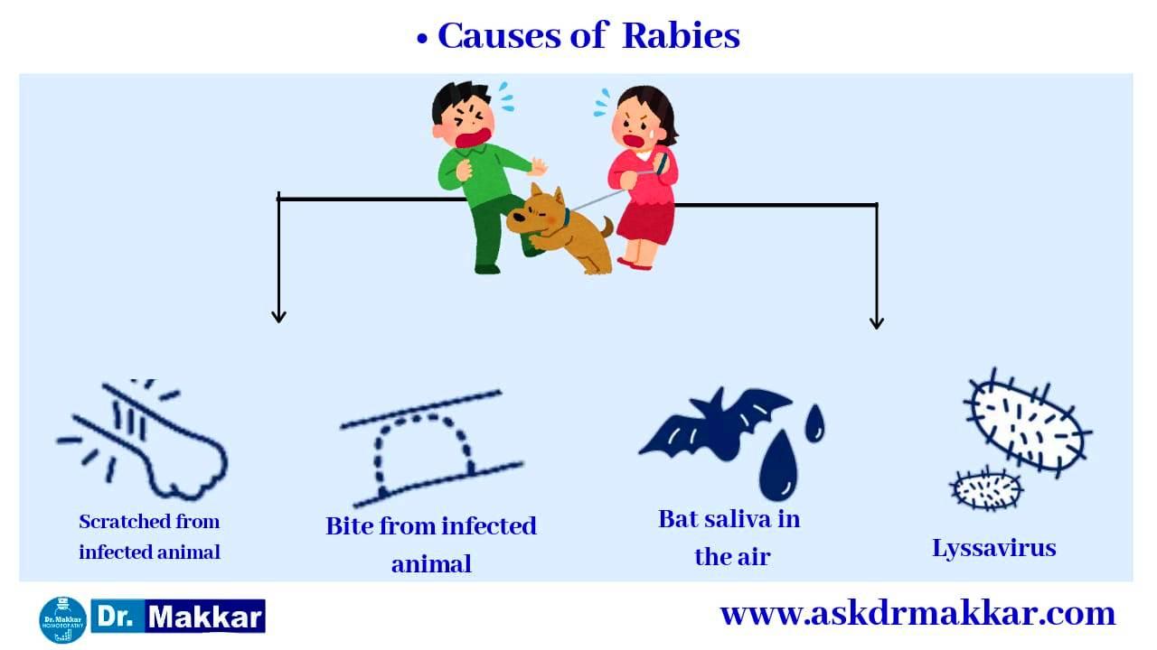 Causes of Rabies