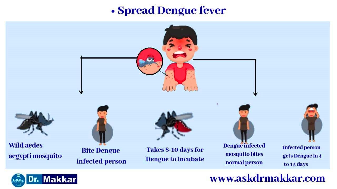 Dengue Causes || डेंगू बुखार के कारण